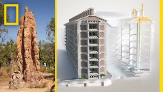 Download See How Termites Inspired a Building That Can Cool Itself | National Geographic Video