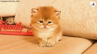 Download ウトウト子猫ちゃんを狙う小さな影…😎【PECO TV】 Video