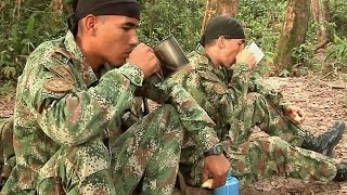 Download Así se produce una ración de campaña para los soldados del Ejército de Colombia Video