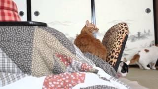 Download かご猫 x こたつ猫 Cat and kotatsu 2014#4 Video