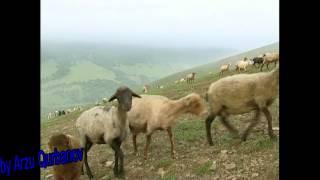 Download Terane Gedebeyli. Video