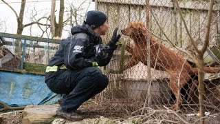 Download 100+ Animals Rescued from Neglect Video