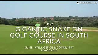 Download Huge African Rock Python snake spotted on Zimbali golf course in Ballito KZN South Africa Video