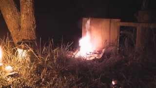 Download Wasps - Underground nest destruction Video