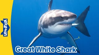 Download Meet the Animals 1: Great White Shark | Level 2 | By Little Fox Video