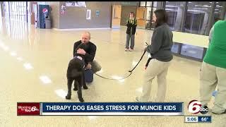 Download Therapy dog eases stress for Muncie students Video