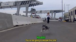 Download Houdini: an intense rescue of an escape artist! A MUST SEE! Video