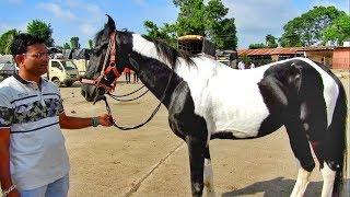 Download YEOLA HORSE MARKET Video-8 Maharashtra Video