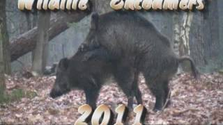 Download Wildlife Encounters 2011 part 1.Veluwe Video