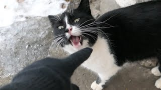Download The cat bit my finger because she wants food Video