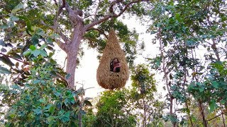 Download Building the beautiful big bird nest house on the tree Video
