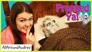 Download Family Fun Halloween Pranks! / AllAroundAudrey Video