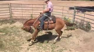 Download Bailey Barrett(15)/Bronc Pen/Smurf Video