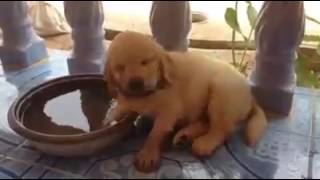 Download 너무 잠이 왔던 강아지 Video