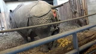 Download Nashorn Durfall Video