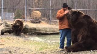 Download Kodiak bear grabs Jim back as he walks away... Video