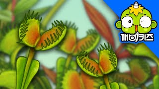 Download 자연관찰 - 꿀꺽, 벌레잡이 식물 [깨비키즈 KEBIKIDS] | 과학도감 Video
