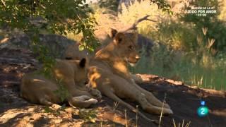 Download Grandes documentales - Leona en el exilio Video