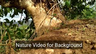 Download Nature Tree video for Background HD Video