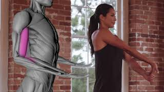 Download Charge Foam Roller - Biceps Video