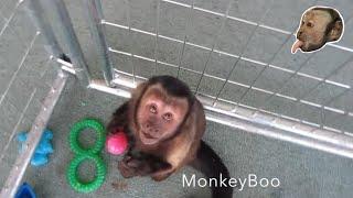 Download Monkey Easter Egg Hunt! Video