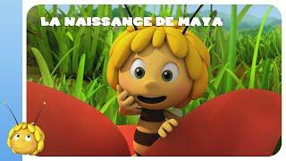 Download MAYA L'ABEILLE - LA NAISSANCE DE MAYA (1/2) Video