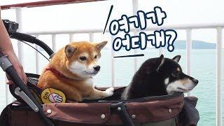Download 강아지랑 제주도행 배를 타봤어요 / 차타고 배타고 제주도가기(3화) Video