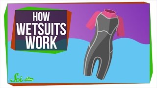 Download How Do Wetsuits Keep You Warm? Video