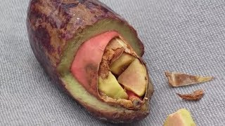 Download Unusual Fruits You May NOT Know About Video