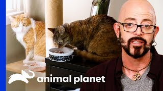 Download Good Kitty Needs To Learn To Stand Up To Her Bullies | My Cat From Hell Video