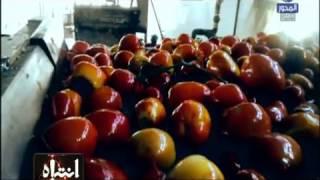 Download انتباه   مراحل تنقية وتنظيف الطماطم بمصانع إنتاج الكاتشب والصلصة في مصر Video
