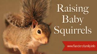 Download Raising Baby Squirrels Video