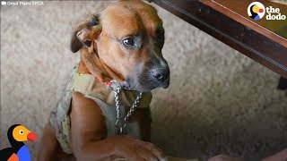 Download Homeless Dog Becomes Veteran's Service Dog And Best Friend | The Dodo Video