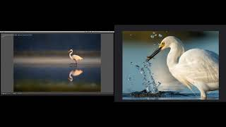 Download Bird Photography during Golden Hour Video