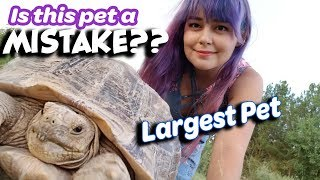 Download Sulcata Tortoise Guide | The Good, The Bad, The Ugly Video