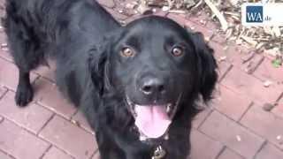 Download Tierheim Hamm: Fünf Hunde suchen Zuhause Video