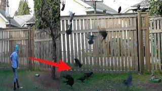 Download Gadis ini beri makan Gagak, tak disangka Balasan Burung ini Sungguh Menakjubkan!! WOW.. Video