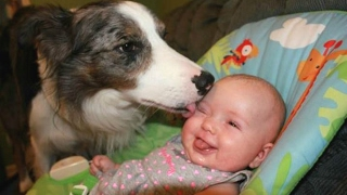 Download Dogs Meeting Babies For The First Time Compilation 2017 [BEST OF] Video