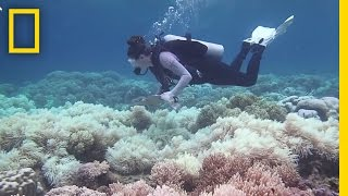 Download The Great Barrier Reef May Be Dying Faster Than We Thought | National Geographic Video