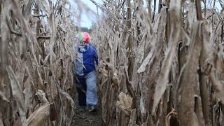 Download KILLER CLOWN CHASES US THROUGH CORNFIELD! Video