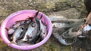 Download Top 5 Cast Net Fishing For Most Big Catfish Ever! Video