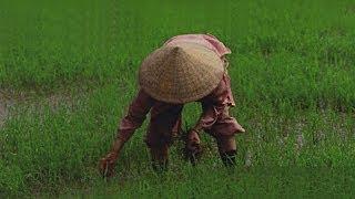 Download Surprising Vietnam HD Video