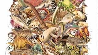 Download Dinosaurs, Dragons and the Bible Video