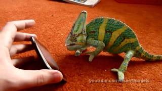 Download Chameleon was frightened by iphone (what did he saw?) Video