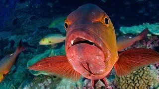 Download Enric Sala - Pristine Seas: Protecting the Last Wild Ocean Places Video