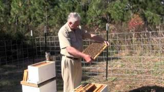 Download Splitting a Honeybee Hive Video