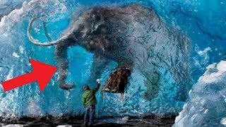 Download Animals Found FROZEN In Ice! Video