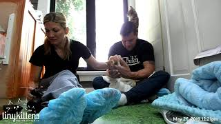 Download Dave gets trapped under a feral mama cat! TinyKittens Video