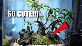Download The Cutest Pet Ants In The World Video