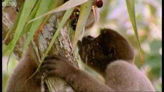 Download Drinking monkeys & bathing birds | Wild South America | BBC Video